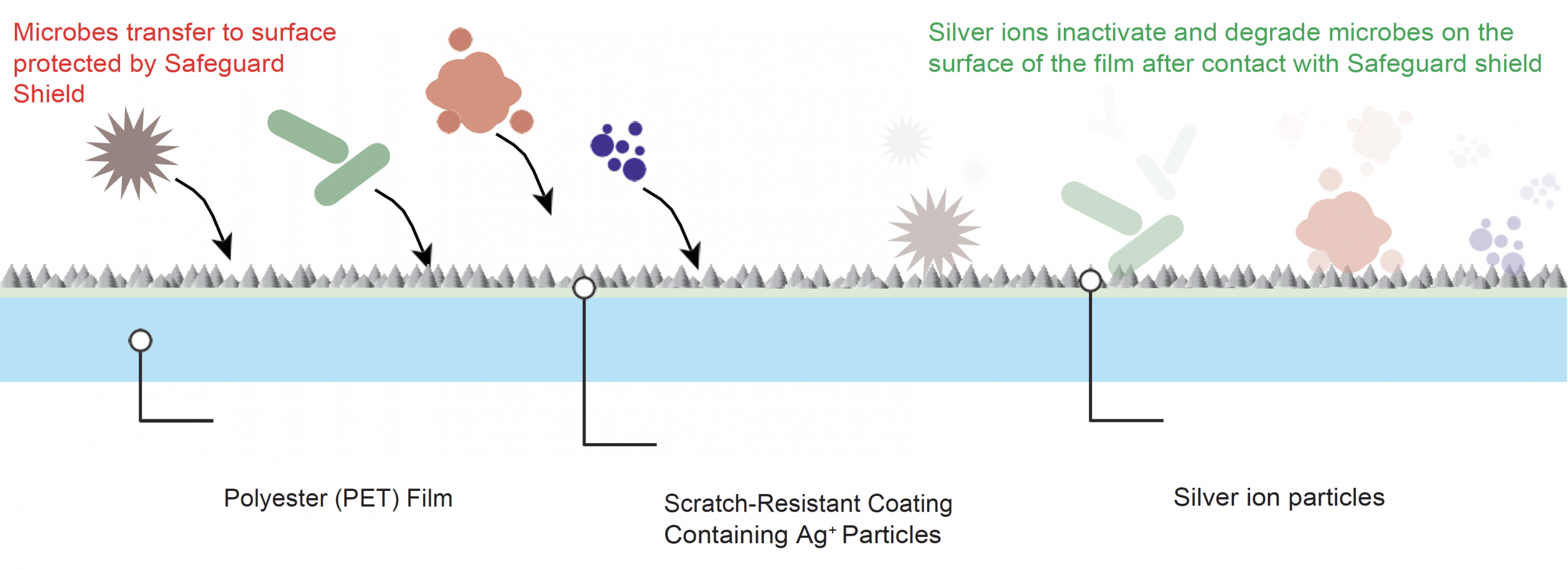 Antimicrobial Protection Film How It Works